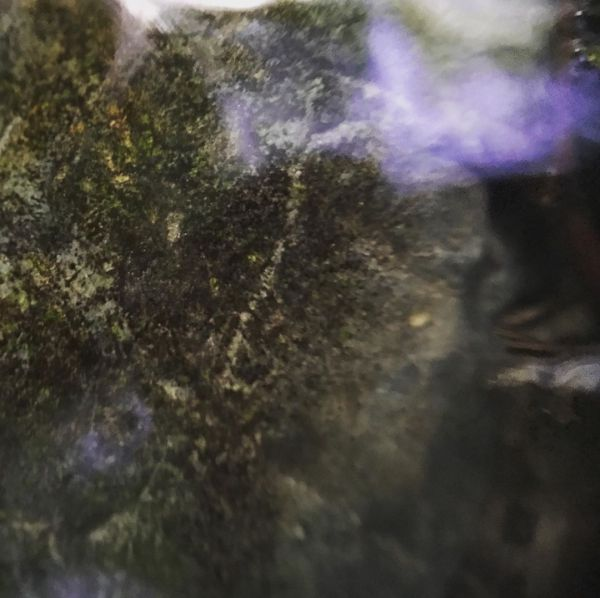 water moss abstract purple